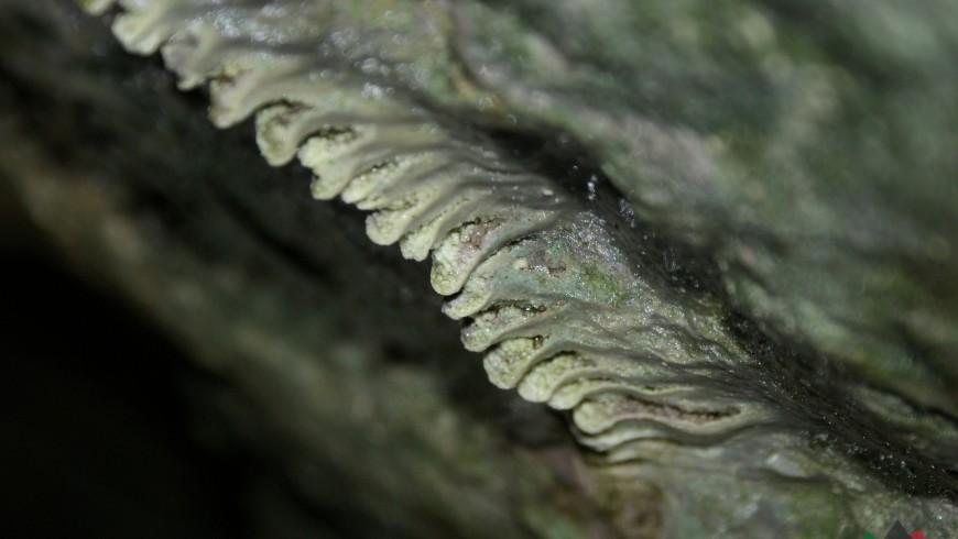 Z lotu nietoperza – schroniska i jaskinie Wąwozu Żarskiego